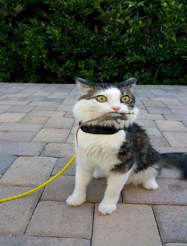 Kertenkelelerin kedilere kafa tuttugunu biliyormuydunuz?